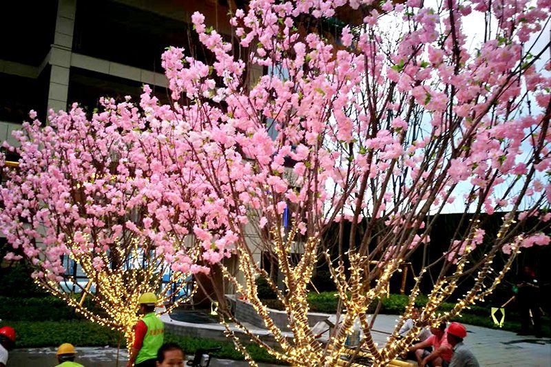 中南置地樱花树包装